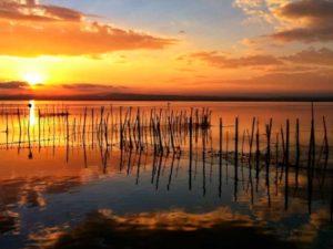 Visita los más hermosos parajes del Parc Natural de l'Albufera